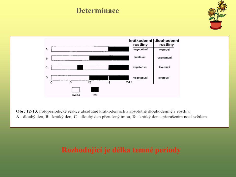Determinace Rozhodující je délka temné periody