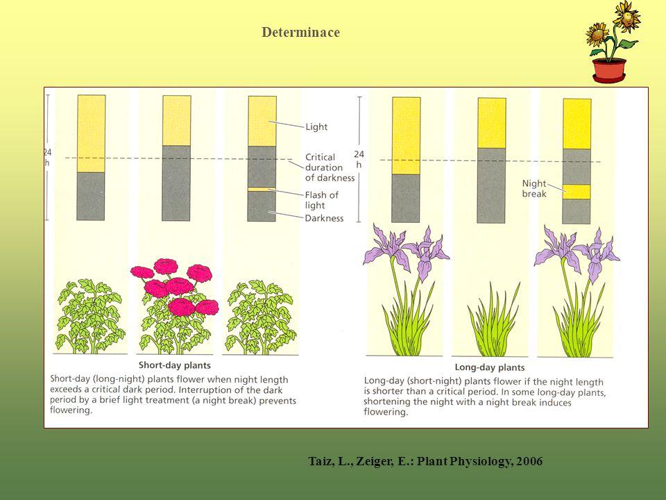 Determinace Taiz, L., Zeiger, E.: Plant Physiology, 2006