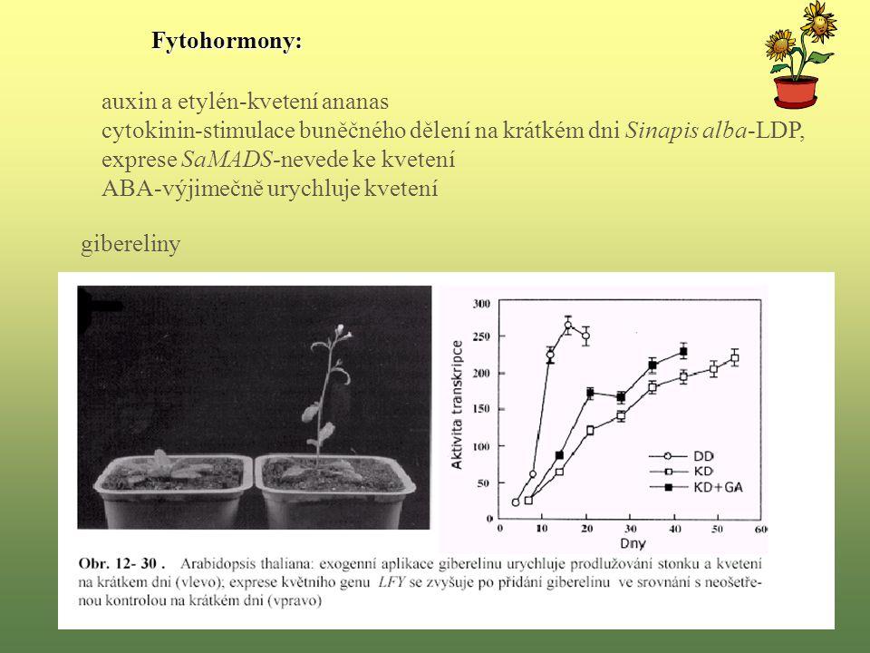 auxin a etylén-kvetení ananas cytokinin-stimulace buněčného dělení na krátkém dni Sinapis alba-LDP, exprese SaMADS-nevede ke kvetení ABA-výjimečně urychluje kvetení gibereliny Fytohormony: