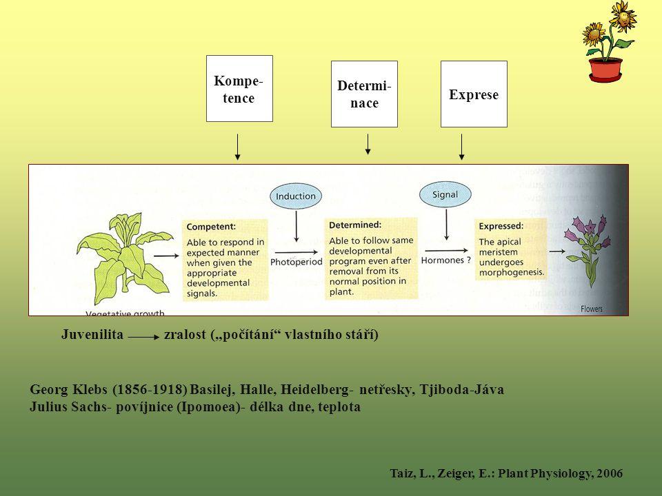 """Kompe- tence Determi- nace Exprese Juvenilita zralost (""""počítání vlastního stáří) Taiz, L., Zeiger, E.: Plant Physiology, 2006 Georg Klebs (1856-1918) Basilej, Halle, Heidelberg- netřesky, Tjiboda-Jáva Julius Sachs- povíjnice (Ipomoea)- délka dne, teplota"""