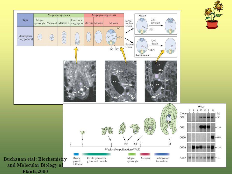 Buchanan etal: Biochemistry and Molecular Biology of Plants,2000