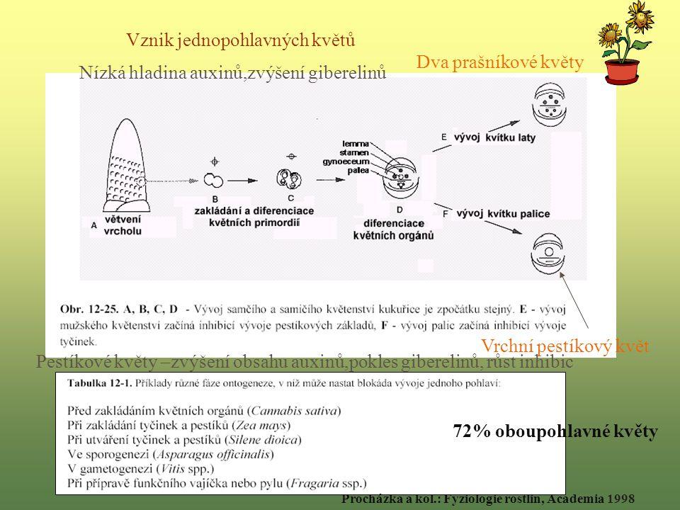 Dva prašníkové květy Vrchní pestíkový květ Nízká hladina auxinů,zvýšení giberelinů Pestíkové květy –zvýšení obsahu auxinů,pokles giberelinů, růst inhibic Vznik jednopohlavných květů 72% oboupohlavné květy Procházka a kol.: Fyziologie rostlin, Academia 1998