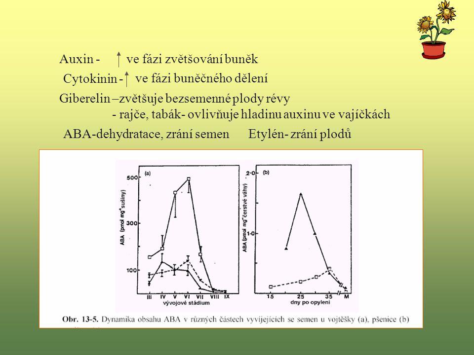 Auxin -ve fázi zvětšování buněk Cytokinin - ve fázi buněčného dělení Giberelin –zvětšuje bezsemenné plody révy - rajče, tabák- ovlivňuje hladinu auxinu ve vajíčkách ABA-dehydratace, zrání semen Etylén- zrání plodů