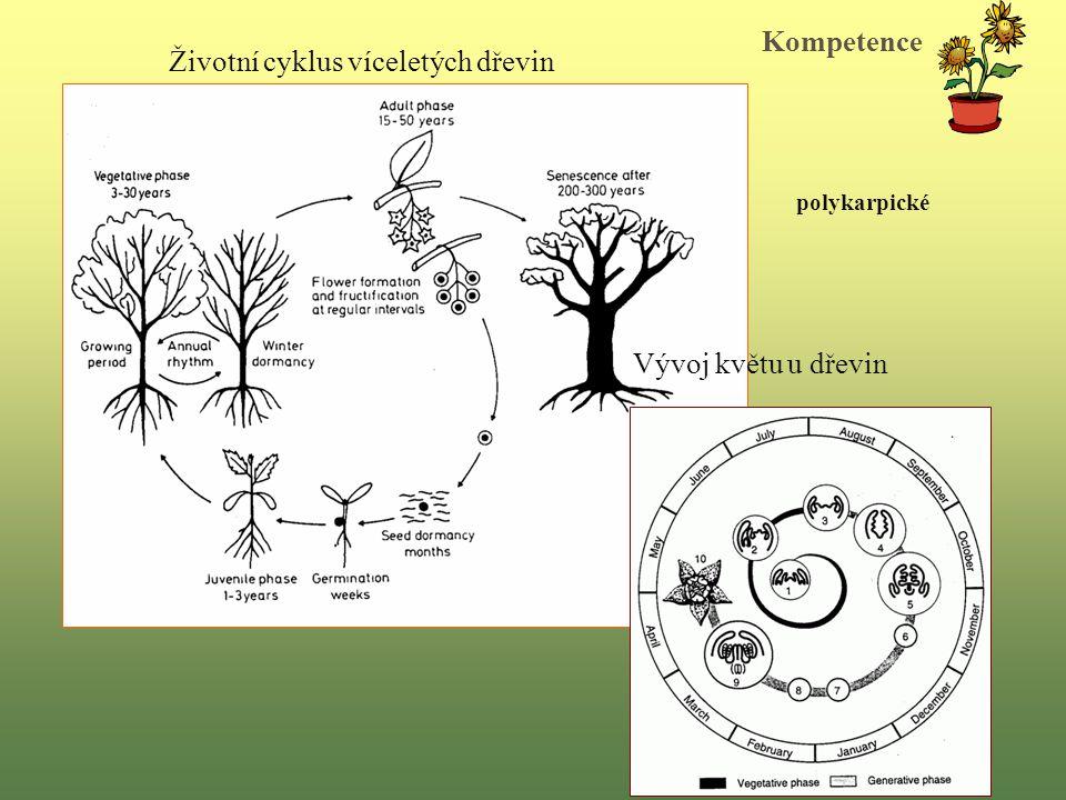 Životní cyklus víceletých dřevin Vývoj květu u dřevin Kompetence polykarpické