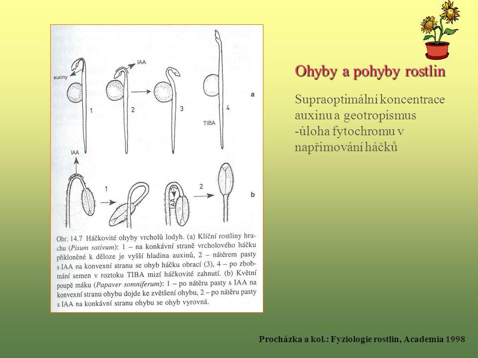Ohyby a pohyby rostlin Supraoptimální koncentrace auxinu a geotropismus -úloha fytochromu v napřimování háčků Procházka a kol.: Fyziologie rostlin, Academia 1998