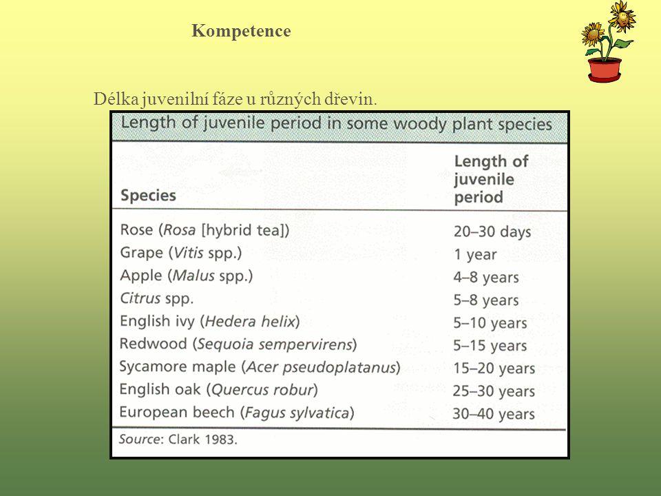 Délka juvenilní fáze u různých dřevin. Kompetence