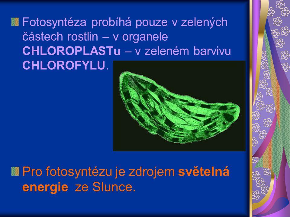 Fotosyntéza probíhá pouze v zelených částech rostlin – v organele CHLOROPLASTu – v zeleném barvivu CHLOROFYLU. Pro fotosyntézu je zdrojem světelná ene