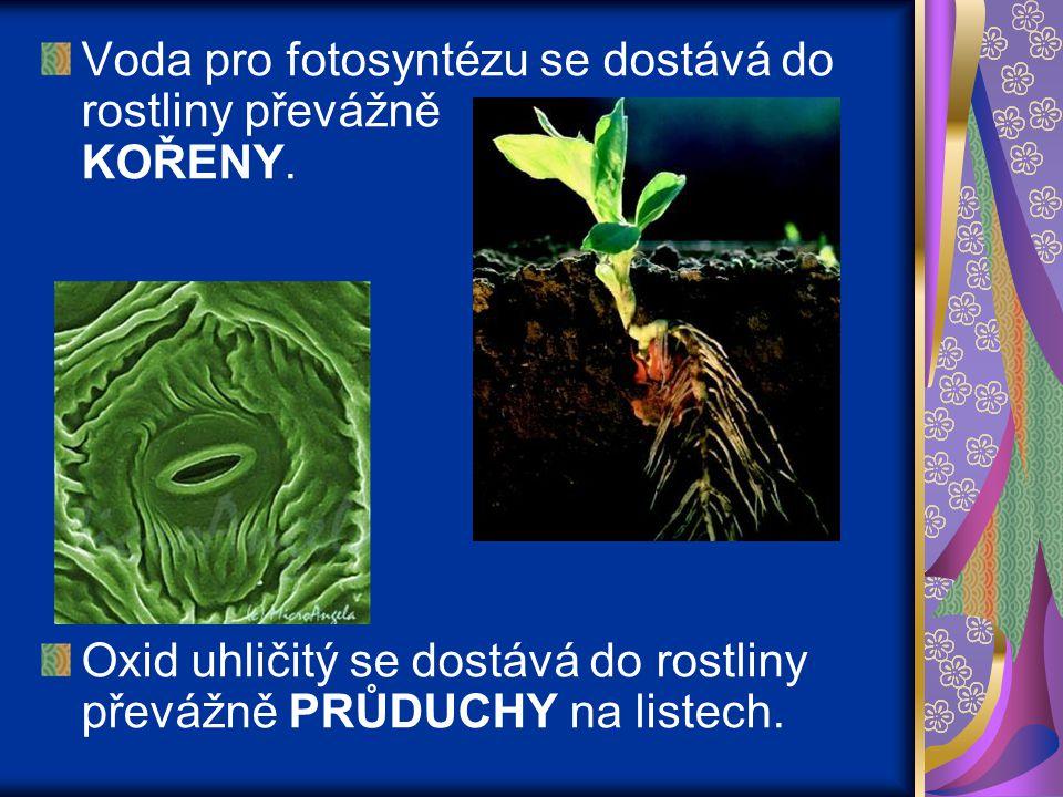 Voda pro fotosyntézu se dostává do rostliny převážně KOŘENY. Oxid uhličitý se dostává do rostliny převážně PRŮDUCHY na listech.