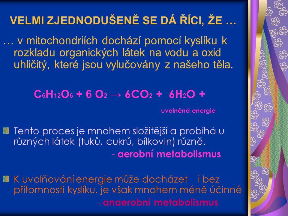 VELMI ZJEDNODUŠENĚ SE DÁ ŘÍCI, ŽE … … v mitochondriích dochází pomocí kyslíku k rozkladu organických látek na vodu a oxid uhličitý, které jsou vylučov