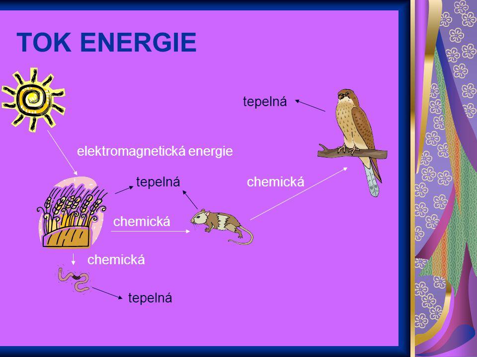 TOK ENERGIE tepelná elektromagnetická energie tepelná chemická chemická tepelná