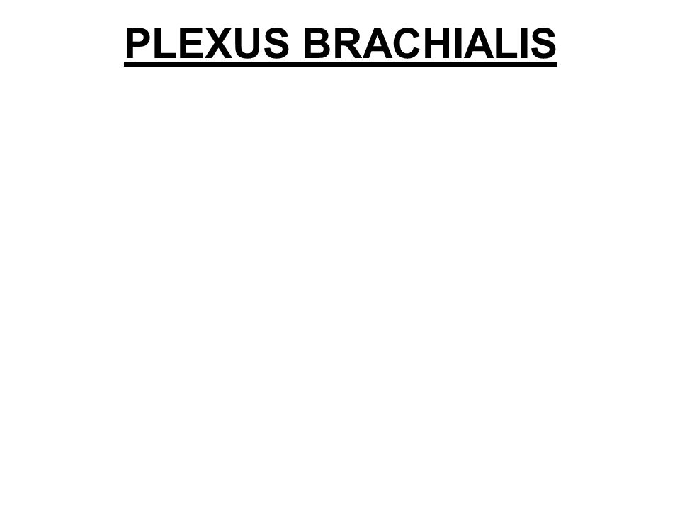 II. PARS INFRACLAVICULARIS fasciculus lateralis fasciculus medialis fasciculus posterior