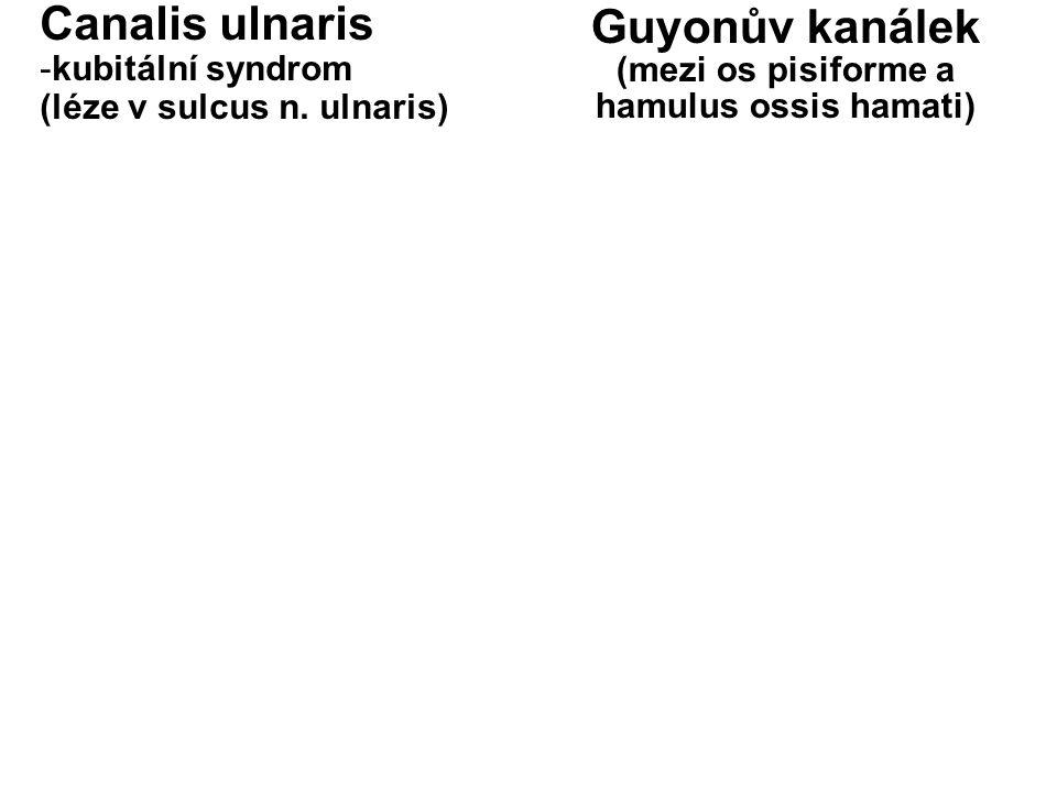 Canalis ulnaris -kubitální syndrom (léze v sulcus n. ulnaris) Guyonův kanálek (mezi os pisiforme a hamulus ossis hamati)