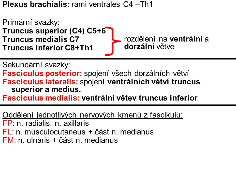 skalenový syndrom (fissura scalenorum) syndrom kostoklavikulární komprese (1.