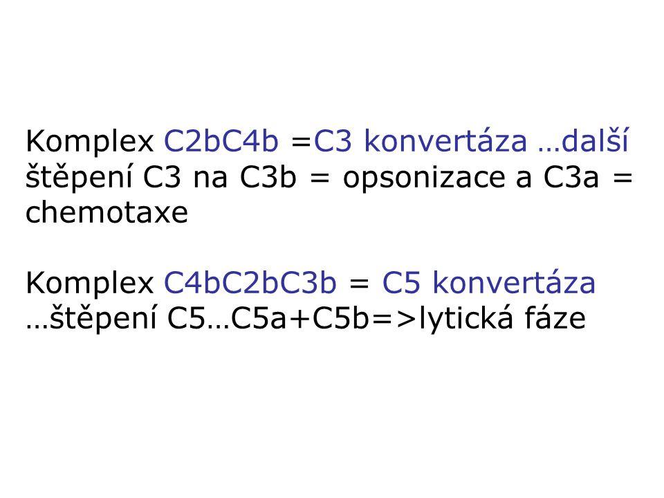 Komplex C2bC4b =C3 konvertáza …další štěpení C3 na C3b = opsonizace a C3a = chemotaxe Komplex C4bC2bC3b = C5 konvertáza …štěpení C5…C5a+C5b=>lytická f