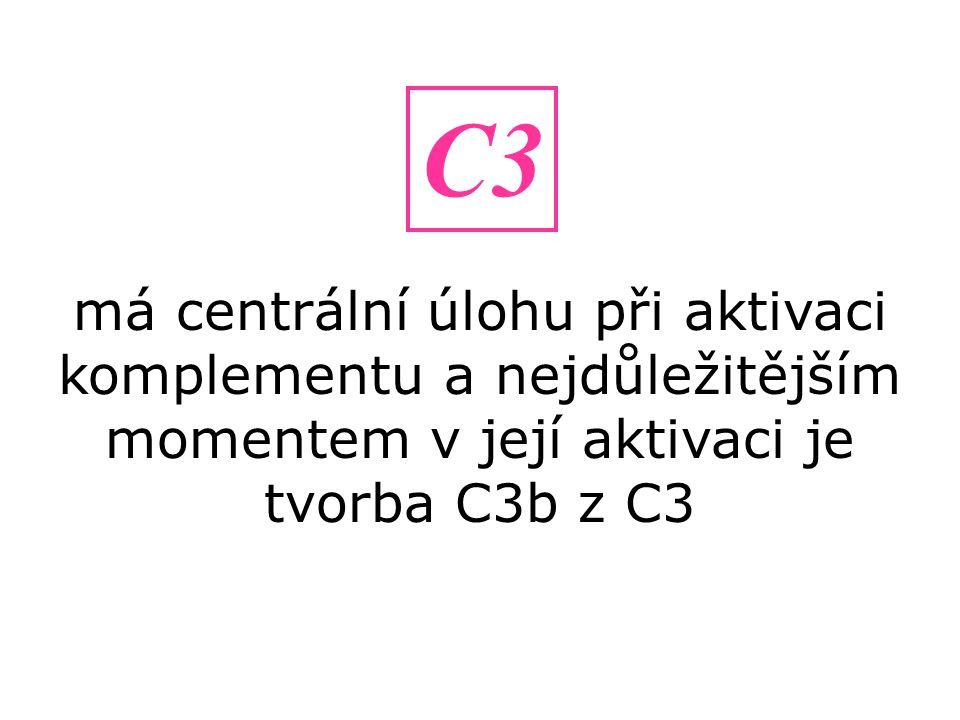 má centrální úlohu při aktivaci komplementu a nejdůležitějším momentem v její aktivaci je tvorba C3b z C3 C3