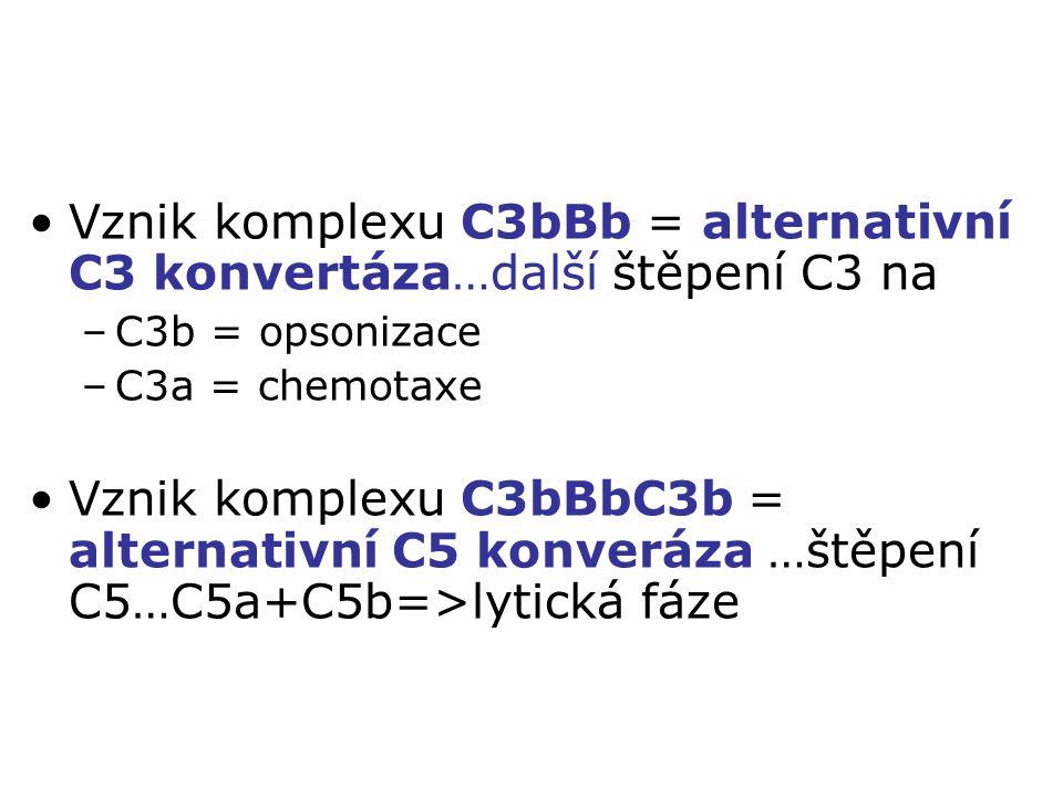 Vznik komplexu C3bBb = alternativní C3 konvertáza…další štěpení C3 na –C3b = opsonizace –C3a = chemotaxe Vznik komplexu C3bBbC3b = alternativní C5 kon