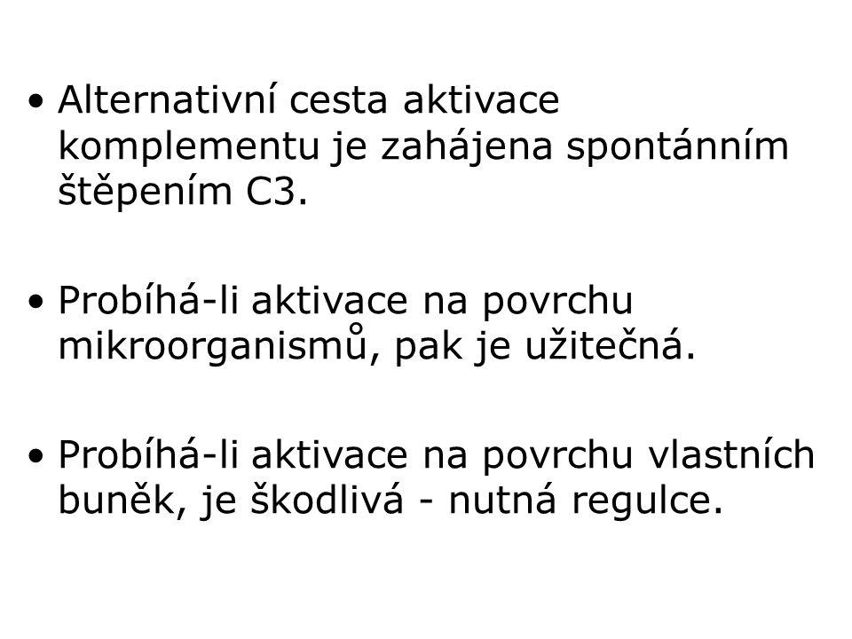 Alternativní cesta aktivace komplementu je zahájena spontánním štěpením C3. Probíhá-li aktivace na povrchu mikroorganismů, pak je užitečná. Probíhá-li