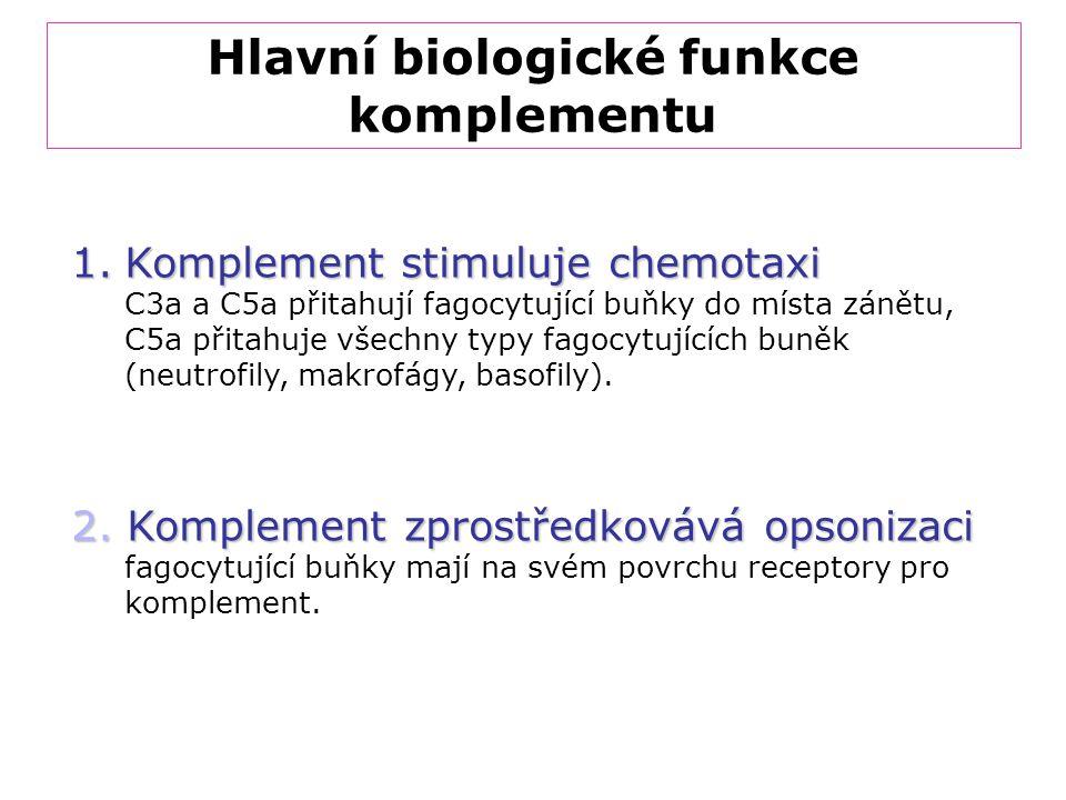 Hlavní biologické funkce komplementu 1.Komplement stimuluje chemotaxi C3a a C5a přitahují fagocytující buňky do místa zánětu, C5a přitahuje všechny ty