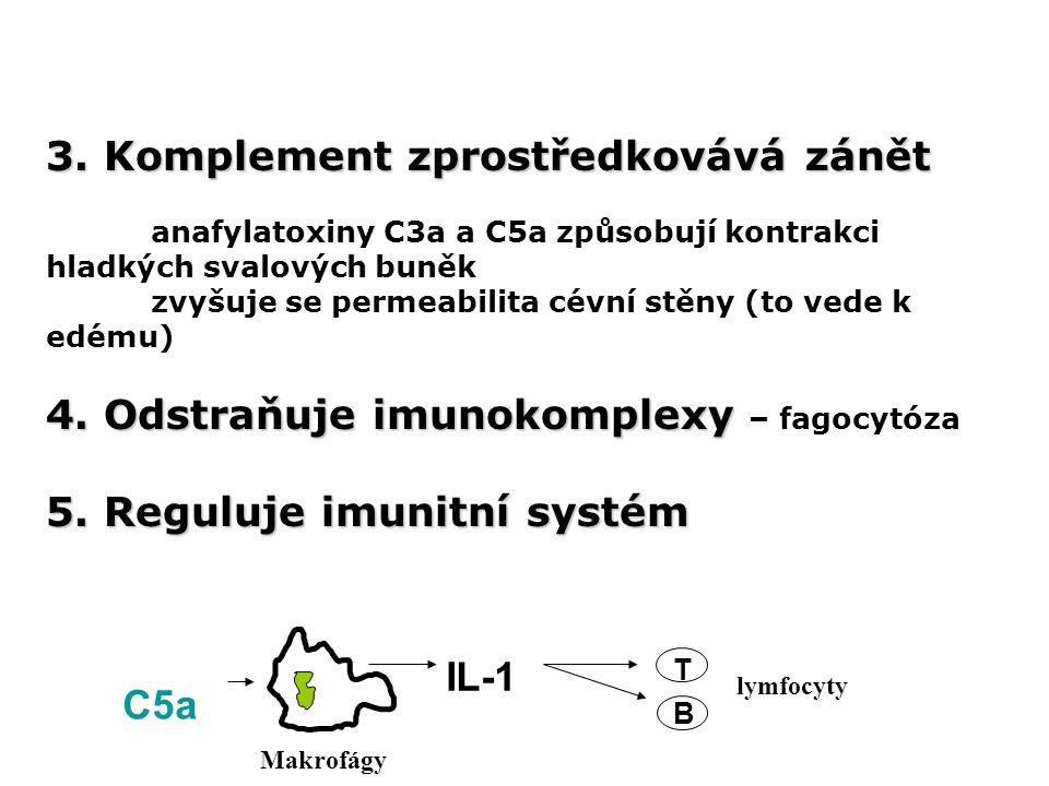 3. Komplement zprostředkovává zánět anafylatoxiny C3a a C5a způsobují kontrakci hladkých svalových buněk zvyšuje se permeabilita cévní stěny (to vede