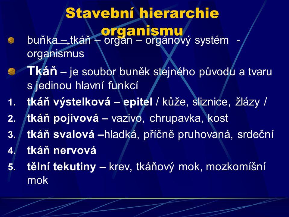 Stavební hierarchie organismu buňka – tkáň – orgán – orgánový systém - organismus Tkáň – je soubor buněk stejného původu a tvaru s jedinou hlavní funkcí 1.