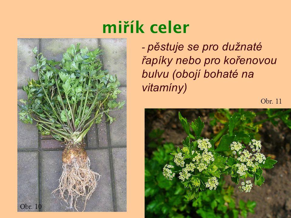 mi ř ík celer - pěstuje se pro dužnaté řapíky nebo pro kořenovou bulvu (obojí bohaté na vitamíny) Obr. 10 Obr. 11