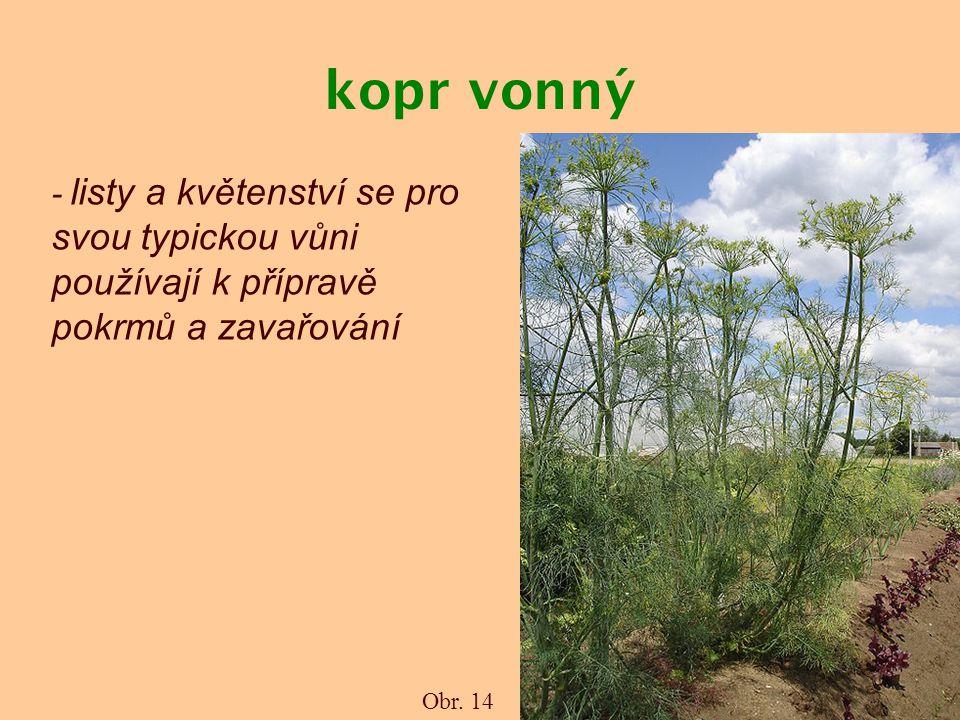 kopr vonný - listy a květenství se pro svou typickou vůni používají k přípravě pokrmů a zavařování Obr. 14