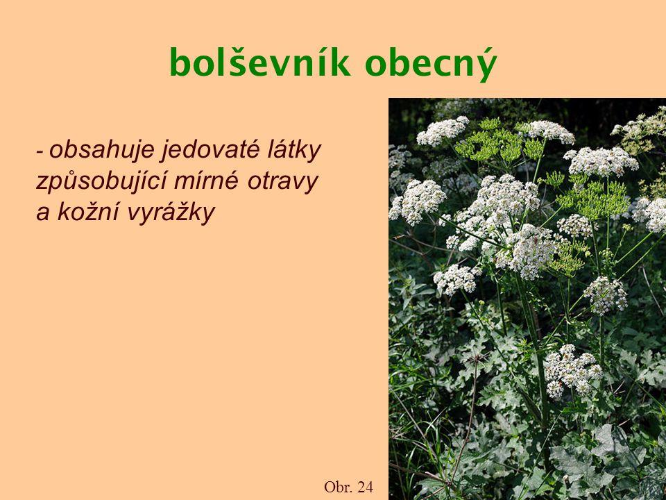 bolševník obecný Obr. 24 - obsahuje jedovaté látky způsobující mírné otravy a kožní vyrážky