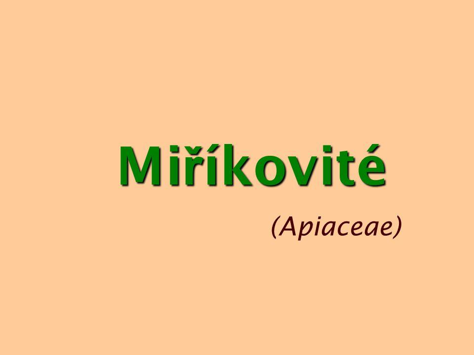 Mi ř íkovité (Apiaceae)