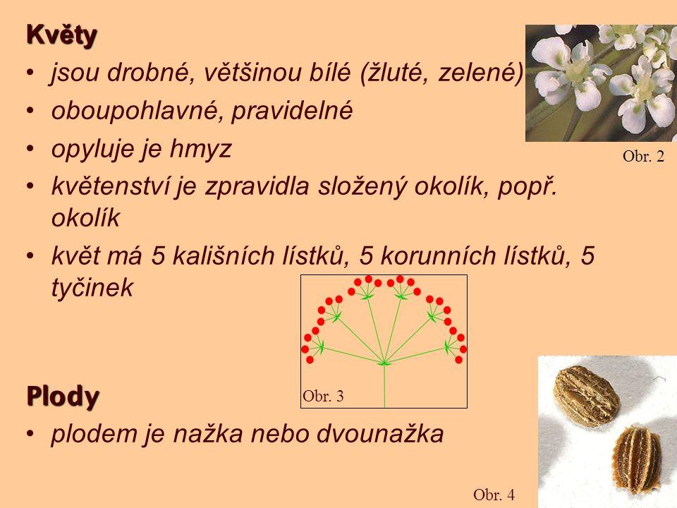 Květy jsou drobné, většinou bílé (žluté, zelené) oboupohlavné, pravidelné opyluje je hmyz květenství je zpravidla složený okolík, popř. okolík květ má