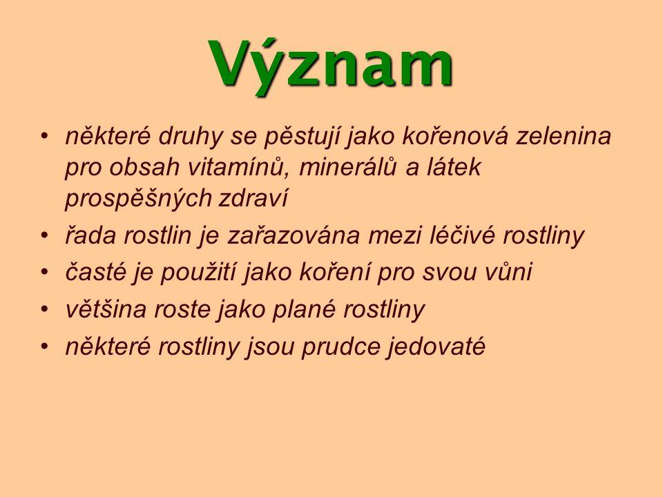 Význam některé druhy se pěstují jako kořenová zelenina pro obsah vitamínů, minerálů a látek prospěšných zdraví řada rostlin je zařazována mezi léčivé