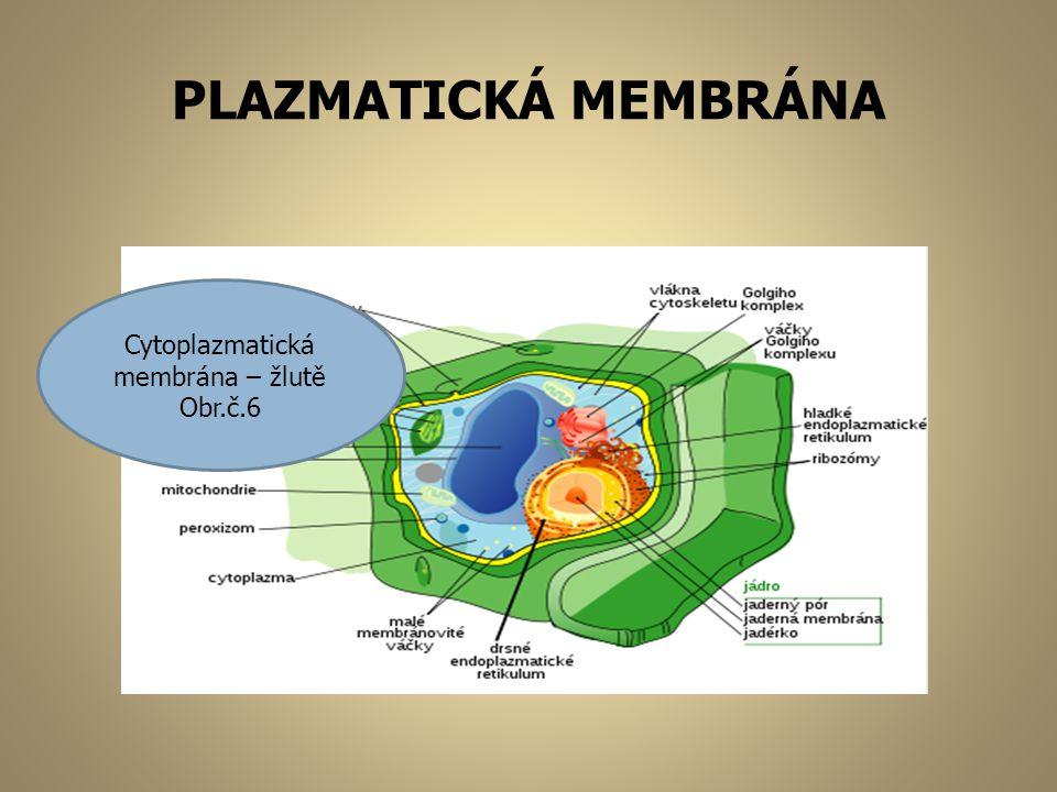 PLAZMATICKÁ MEMBRÁNA Cytoplazmatická membrána – žlutě Obr.č.6