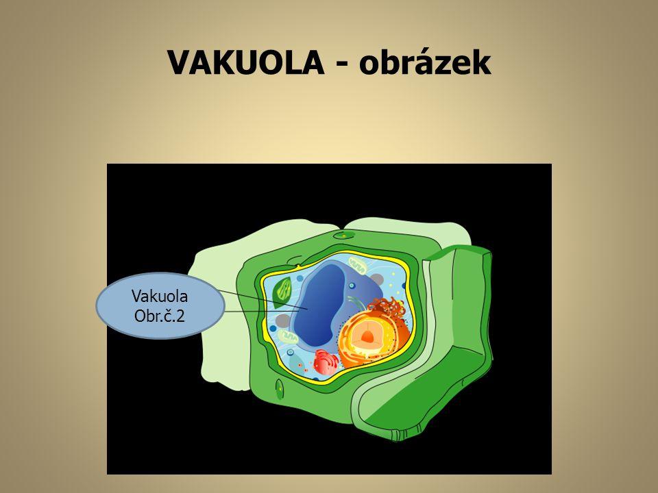 VAKUOLA - obrázek Vakuola Obr.č.2