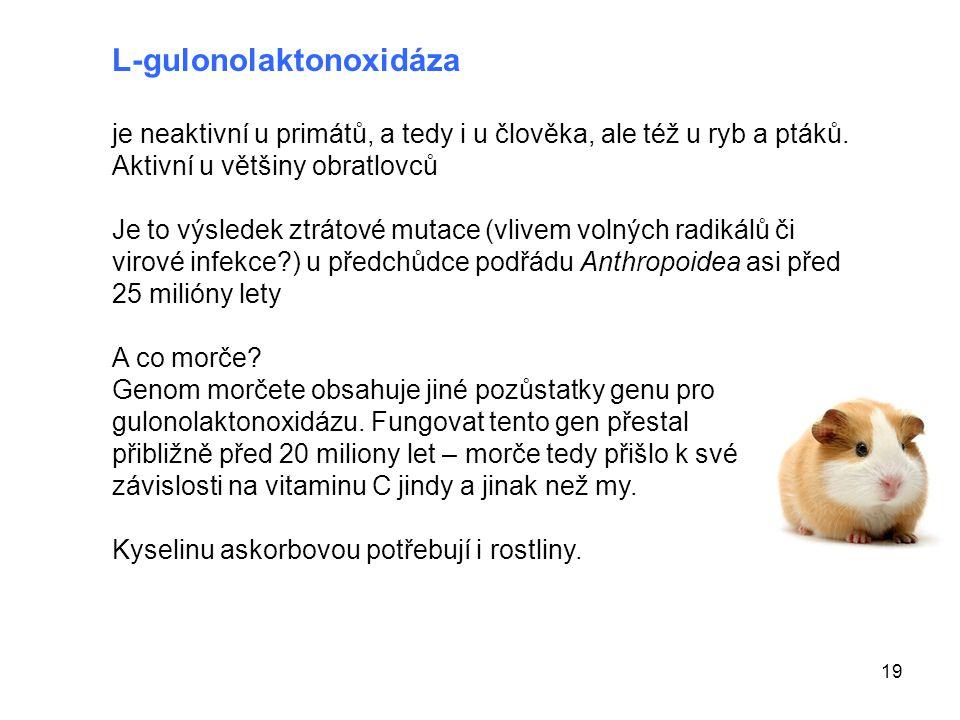 19 L-gulonolaktonoxidáza je neaktivní u primátů, a tedy i u člověka, ale též u ryb a ptáků. Aktivní u většiny obratlovců Je to výsledek ztrátové mutac