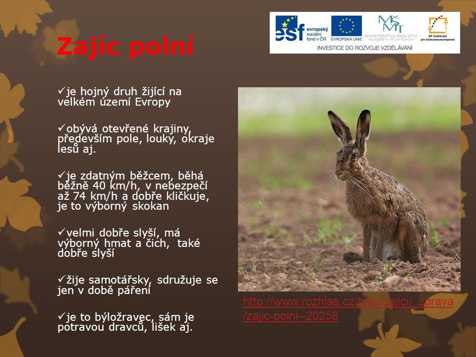 Zajíc polní je hojný druh žijící na velkém území Evropy obývá otevřené krajiny, především pole, louky, okraje lesů aj. je zdatným běžcem, běhá běžně 4
