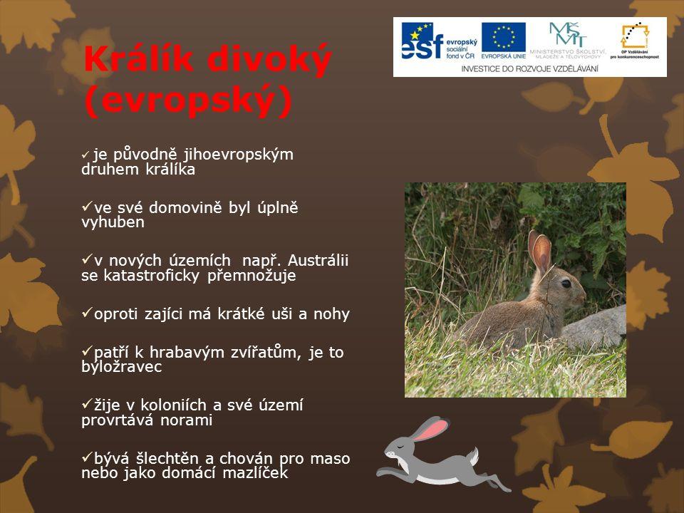 Králík divoký (evropský) je původně jihoevropským druhem králíka ve své domovině byl úplně vyhuben v nových územích např. Austrálii se katastroficky p