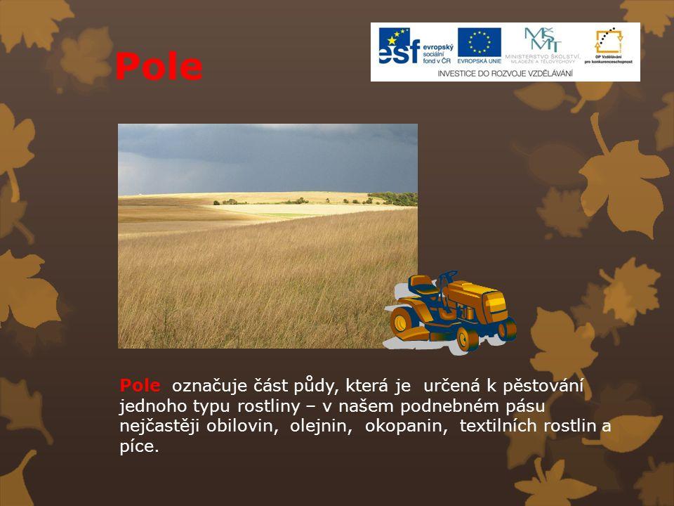 Pole Pole označuje část půdy, která je určená k pěstování jednoho typu rostliny – v našem podnebném pásu nejčastěji obilovin, olejnin, okopanin, texti