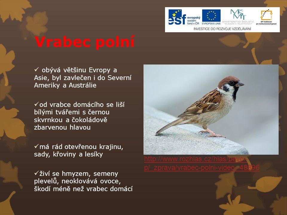 Vrabec polní obývá většinu Evropy a Asie, byl zavlečen i do Severní Ameriky a Austrálie od vrabce domácího se liší bílými tvářemi s černou skvrnkou a