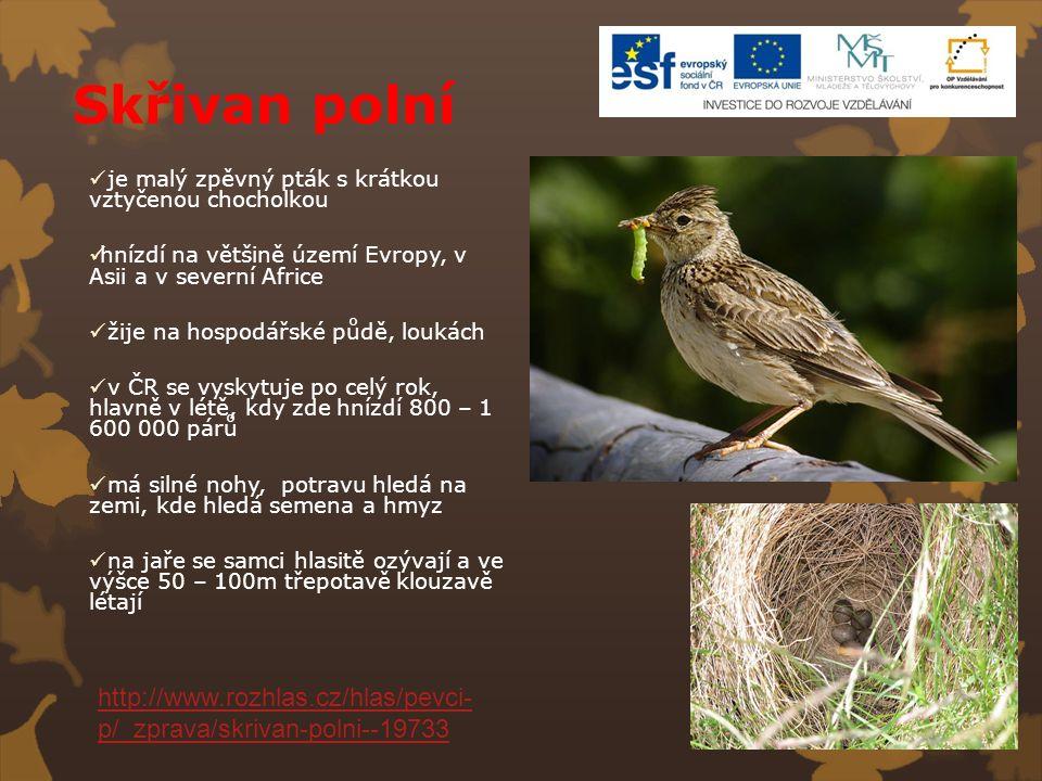 Skřivan polní je malý zpěvný pták s krátkou vztyčenou chocholkou hnízdí na většině území Evropy, v Asii a v severní Africe žije na hospodářské půdě, l