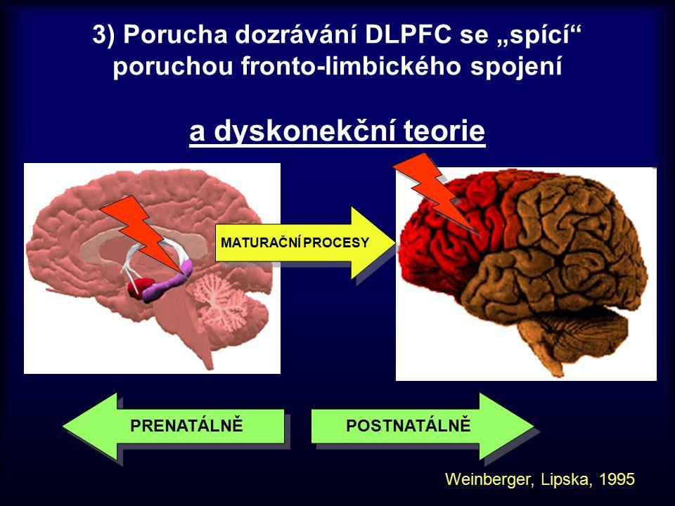 """PRENATÁLNĚ POSTNATÁLNĚ 3) Porucha dozrávání DLPFC se """"spící"""" poruchou fronto-limbického spojení a dyskonekční teorie MATURAČNÍ PROCESY Weinberger, Lip"""