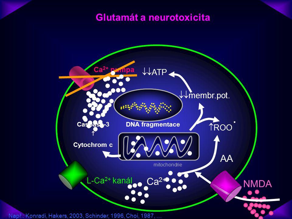 NMDA L-Ca 2+ kanál Ca 2+ pumpa Glutamát a neurotoxicita mitochondrie Ca 2+ Caspase-3  Cytochrom c DNA fragmentace  membr.pot.  ATP  ROO ˙ AA Nap