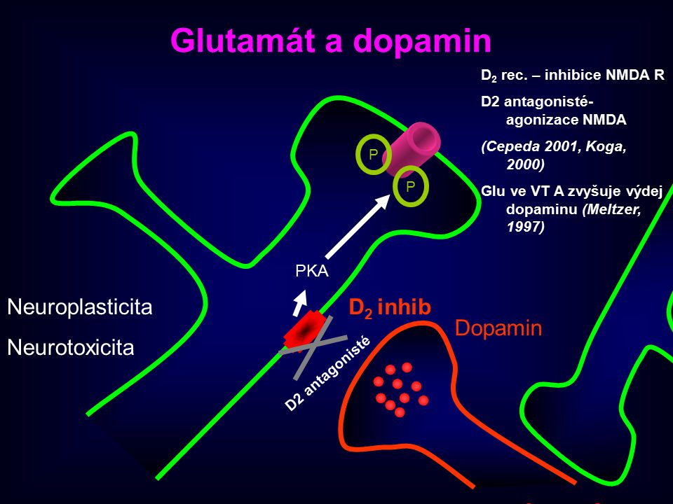 Dopamin D 2 inhib PKA P P D2 antagonisté Glutamát a dopamin D 2 rec. – inhibice NMDA R D2 antagonisté- agonizace NMDA (Cepeda 2001, Koga, 2000) Glu ve