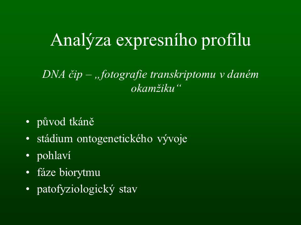 """Analýza expresního profilu DNA čip – """"fotografie transkriptomu v daném okamžiku"""" původ tkáně stádium ontogenetického vývoje pohlaví fáze biorytmu pato"""
