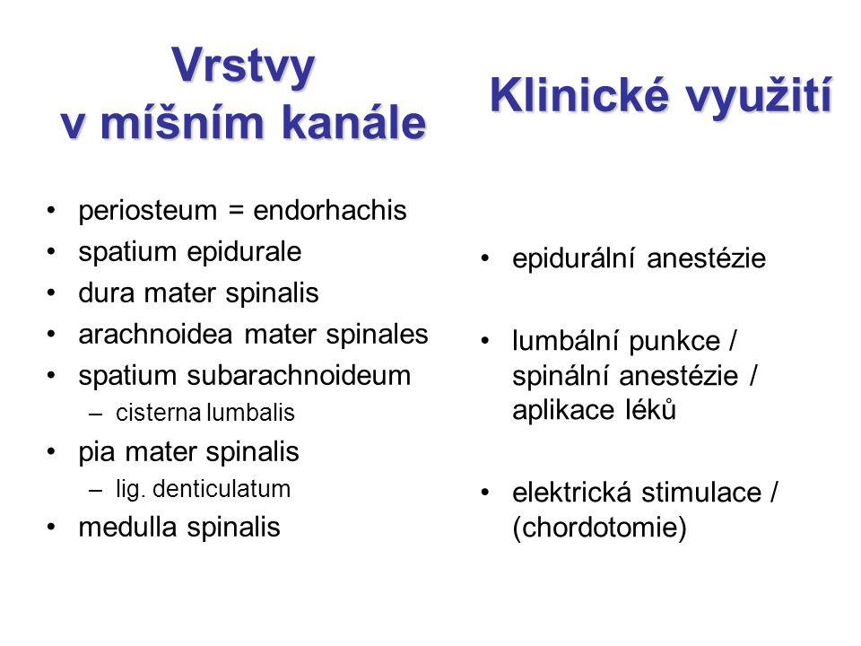 Vrstvy v míšním kanále periosteum = endorhachis spatium epidurale dura mater spinalis arachnoidea mater spinales spatium subarachnoideum –cisterna lum
