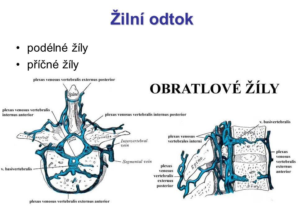 Žilní odtok podélné žíly příčné žíly –vv. basivertebrales probíhají skrz obratlová těla, která jsou bohatě protkaná spojují vnitřní a vnější žilní ple