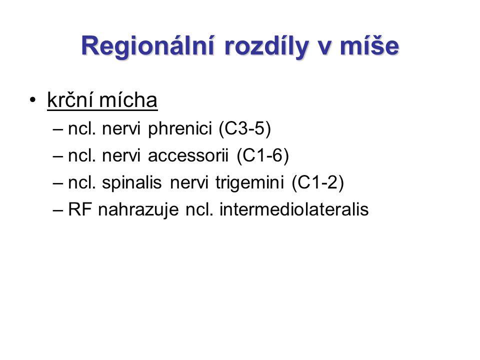 Regionální rozdíly v míše krční mícha –ncl. nervi phrenici (C3-5) –ncl. nervi accessorii (C1-6) –ncl. spinalis nervi trigemini (C1-2) –RF nahrazuje nc