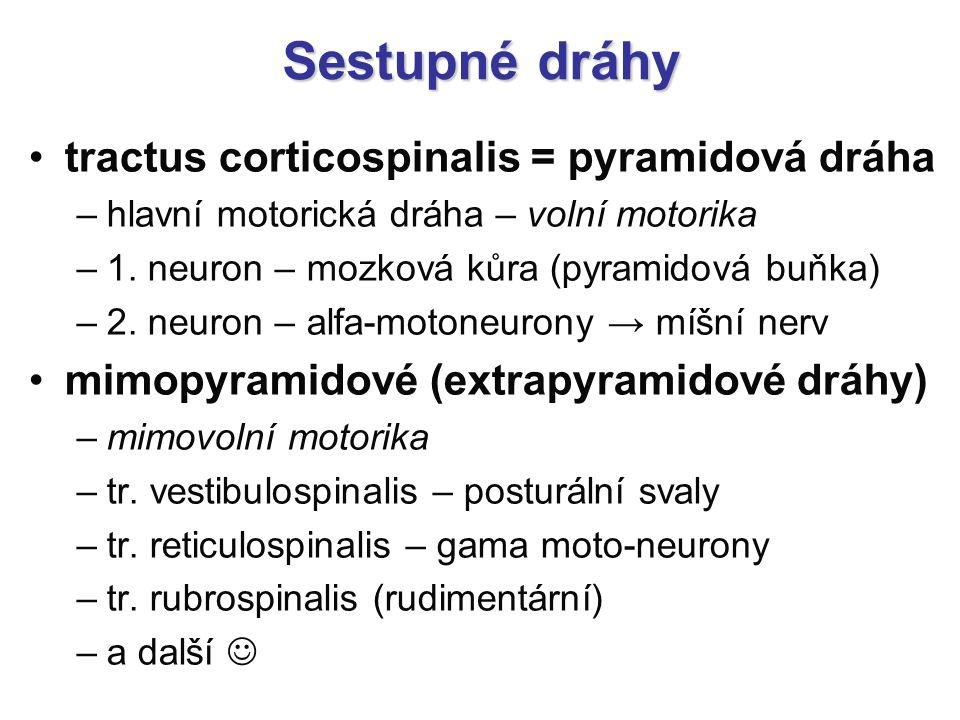 Sestupné dráhy tractus corticospinalis = pyramidová dráha –hlavní motorická dráha – volní motorika –1. neuron – mozková kůra (pyramidová buňka) –2. ne