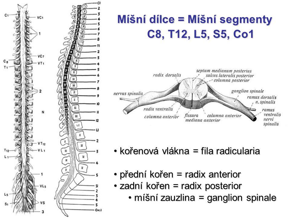 Míšní dílce = Míšní segmenty C8, T12, L5, S5, Co1 C8, T12, L5, S5, Co1 kořenová vlákna = fila radicularia kořenová vlákna = fila radicularia přední ko