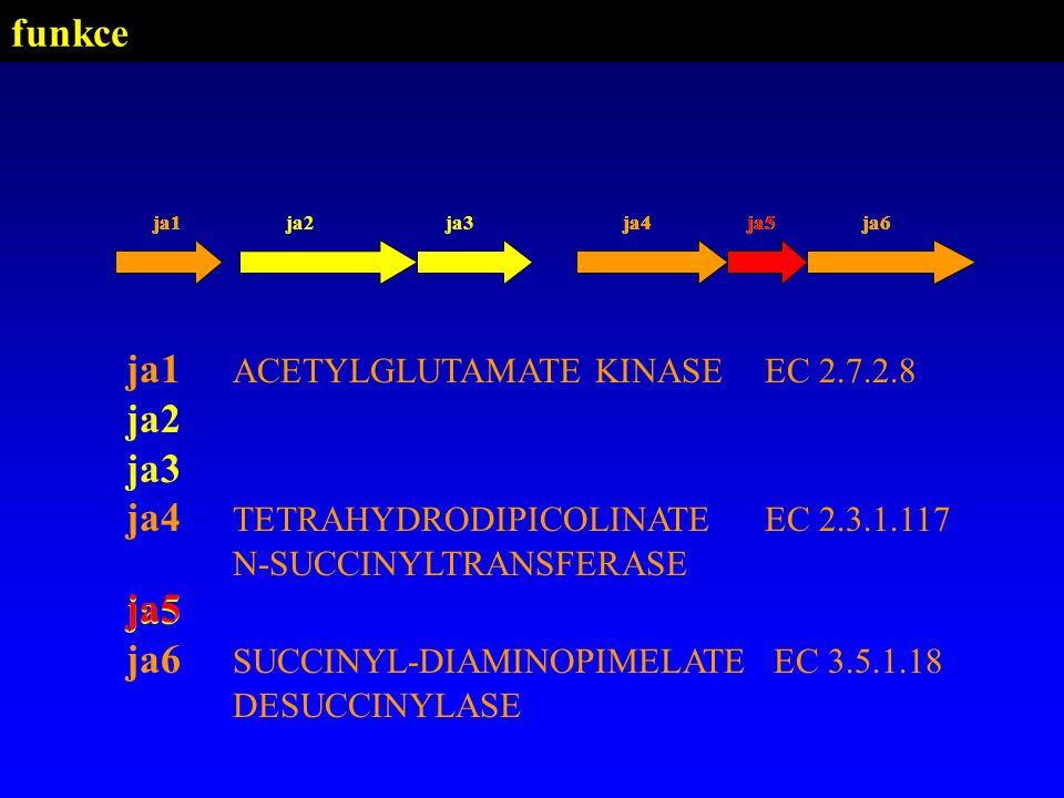 ja1 ACETYLGLUTAMATE KINASE EC 2.7.2.8 ja2 ja3 ja4 TETRAHYDRODIPICOLINATE EC 2.3.1.117 N-SUCCINYLTRANSFERASE ja5 ja6 SUCCINYL-DIAMINOPIMELATE EC 3.5.1.