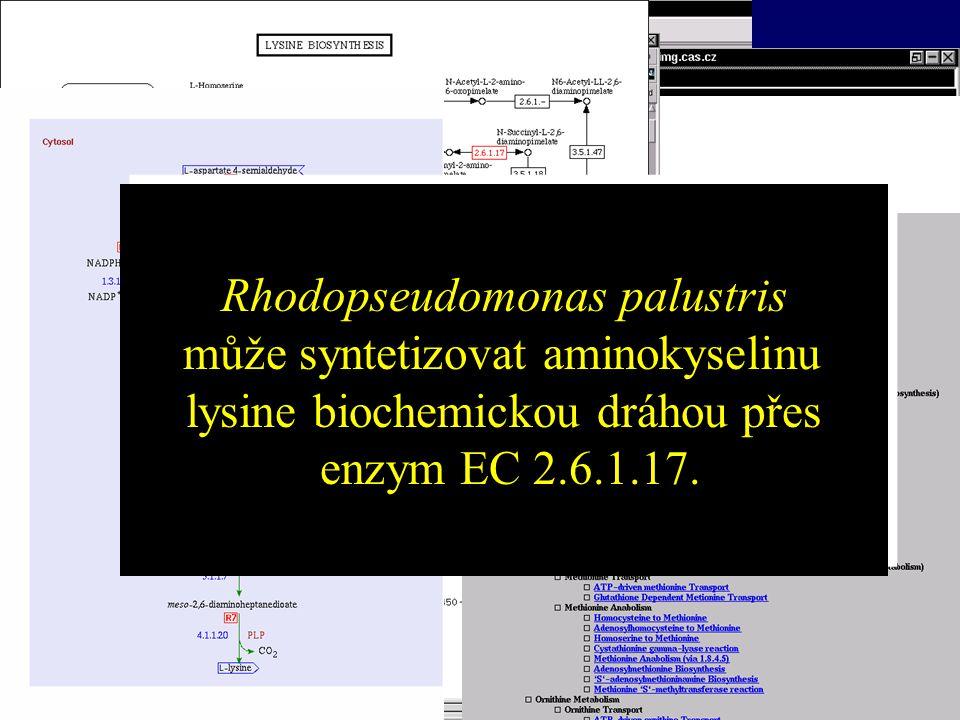 Bioinformatika Rhodopseudomonas palustris může syntetizovat aminokyselinu lysine biochemickou dráhou přes enzym EC 2.6.1.17. Rhodopseudomonas palustri