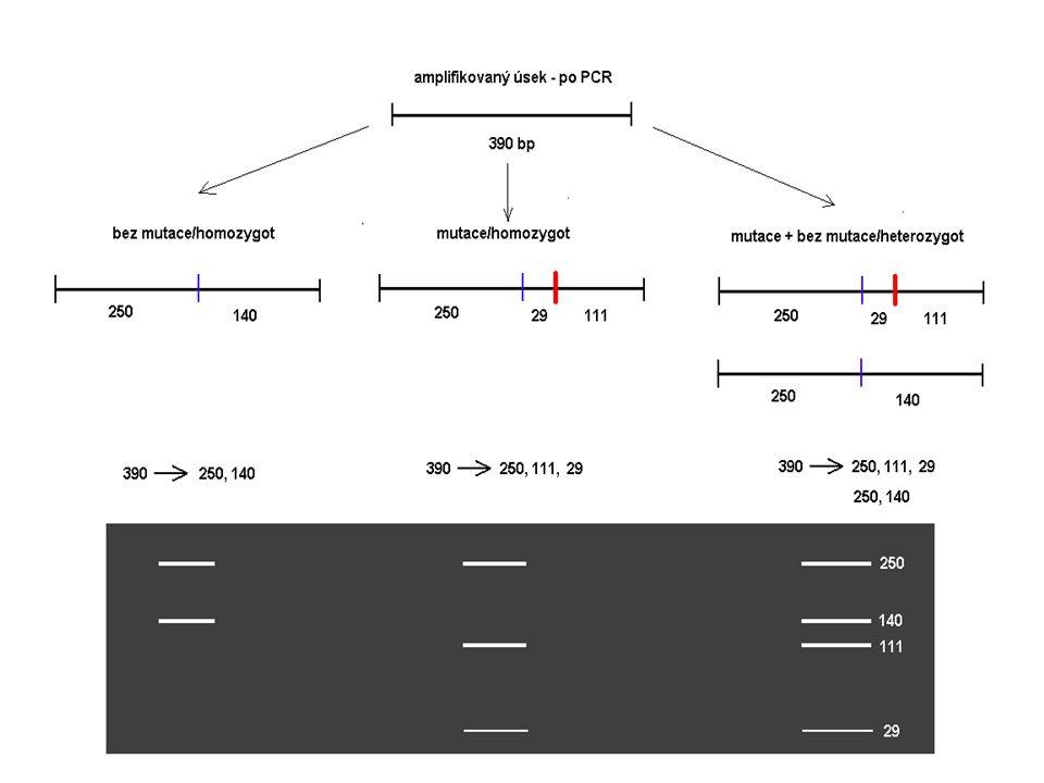 RFLP – mutace C282Y - ELFO